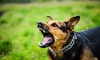 Stop Dog Barking: Dog Aggression Training Online